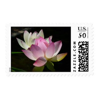 Pair of Lotus Flowers II Postage
