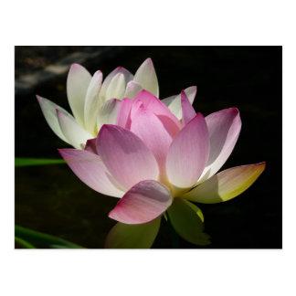 Pair of Lotus Flowers II Postcard