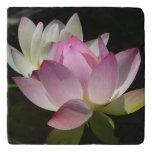 Pair of Lotus Flowers II Trivet