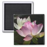 Pair of Lotus Flowers Magnet