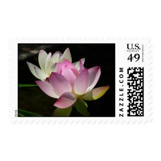 Pair of Lotus Flowers Stamps
