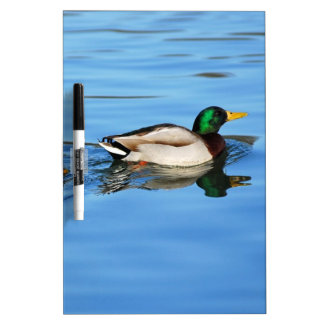 Pair of mallard ducks Dry-Erase whiteboard