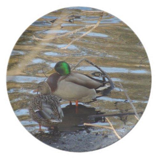 Pair of Mallard Ducks on Shore's Edge Dinner Plates