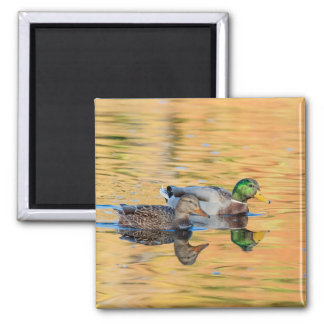 Pair of Mallards 2 Inch Square Magnet
