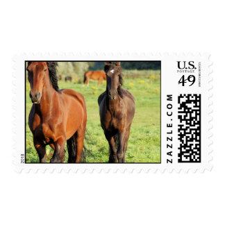 Pair of Morgans Postage Stamp