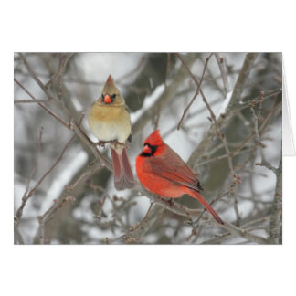 Pair Of Northern Cardinals Card