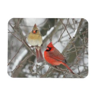 Pair Of Northern Cardinals Rectangular Photo Magnet