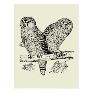 Pair of Owls Postcard