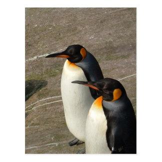 Pair of Penguins Postcard