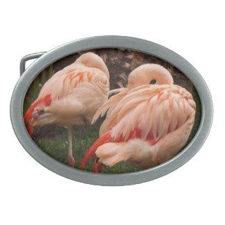 Pair of Pink Flamingos Belt Buckles