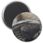 Pair of Porcupines Magnet Refrigerator Magnet