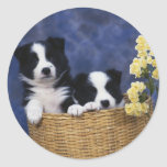 Pair of Puppies in a Basket Classic Round Sticker