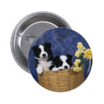 Pair of Puppies in a Basket Pins