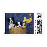 Pair of Puppies in a Basket Postage Stamps