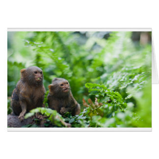 Pair of pygmy monkeys card