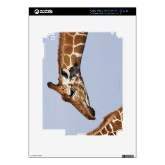 Pair of Reticulated Giraffes (Giraffa) iPad 3 Decal