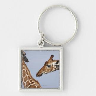 Pair of Reticulated Giraffes (Giraffa) Silver-Colored Square Keychain