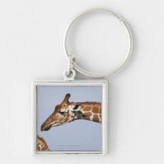 Pair of Reticulated Giraffes (Giraffa Silver-Colored Square Keychain
