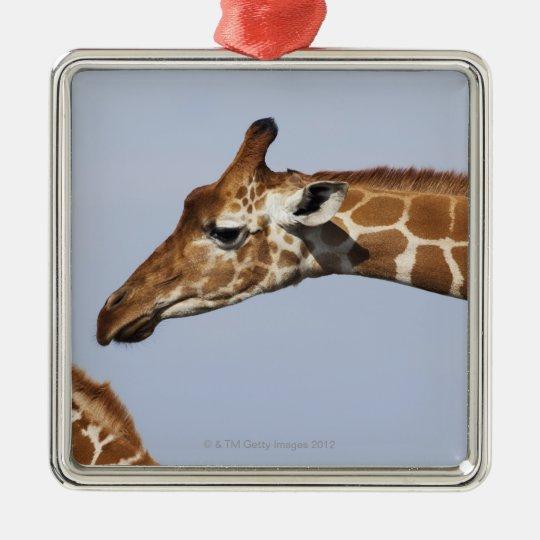 Pair of Reticulated Giraffes (Giraffa Metal Ornament