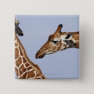 Pair of Reticulated Giraffes (Giraffa) Pinback Button