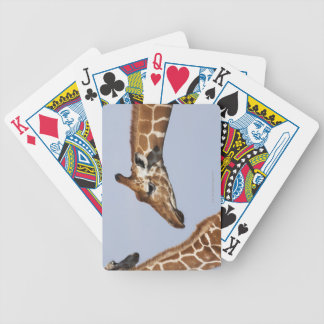 Pair of Reticulated Giraffes (Giraffa) Bicycle Playing Cards