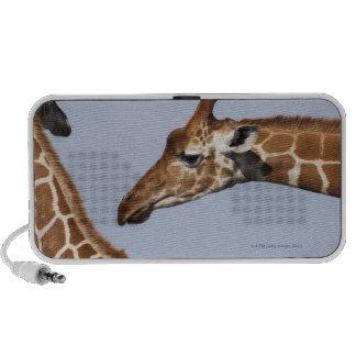 Pair of Reticulated Giraffes (Giraffa) Speakers