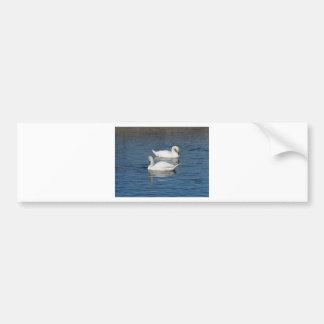 Pair of Swans Bumper Sticker