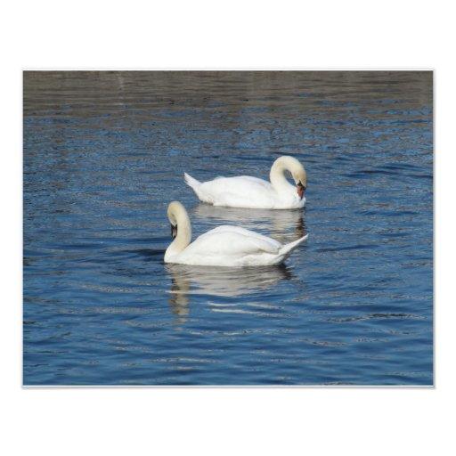 Pair of Swans Invites