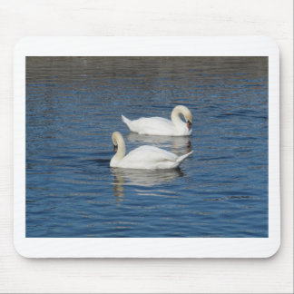 Pair of Swans Mouse Pad