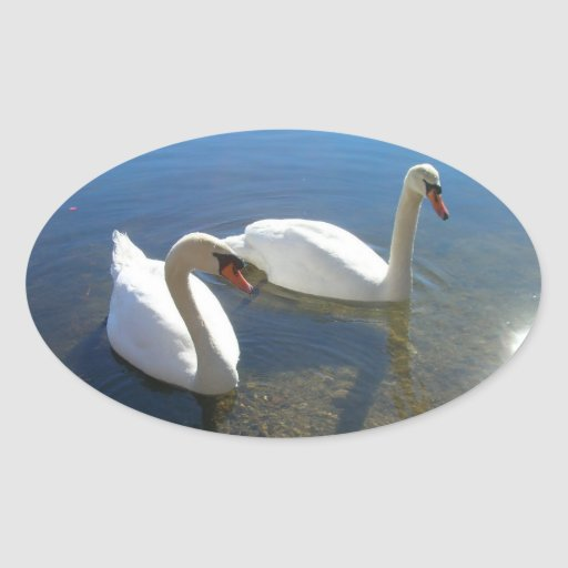 Pair of Swans Oval Stickers