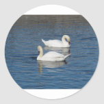 Pair of Swans Stickers