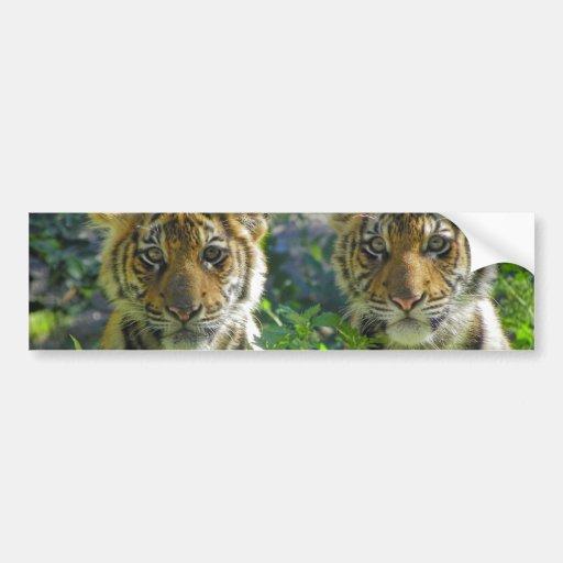 Pair of Tiger Cubs Portrait Car Bumper Sticker