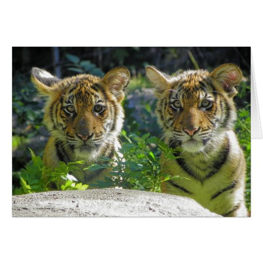 Pair of Tiger Cubs Portrait Card