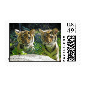 Pair of Tiger Cubs Portrait Postage