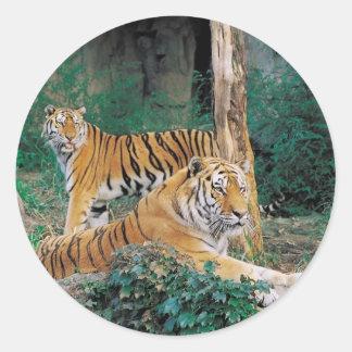 Pair of Tigers Classic Round Sticker