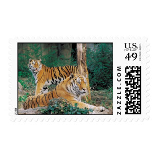 Pair of Tigers Postage Stamps