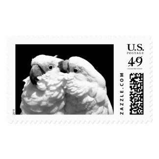 Pair of umbrella cockatoos postage stamp