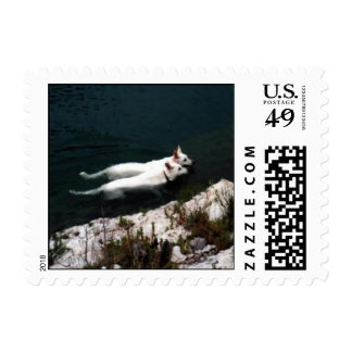 Pair of White Shepherds swimming together. Postage