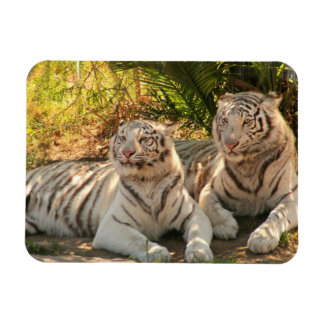 Pair of White Tigers Flexible Magnet Magnets