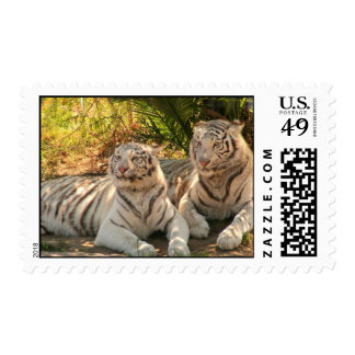 Pair of White Tigers Postage Stamp