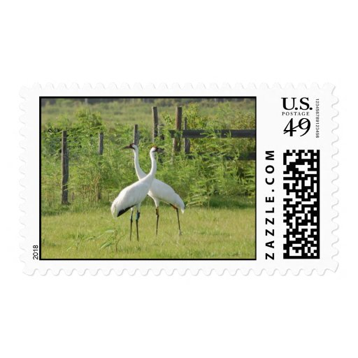 Pair of Whooping Cranes Postage