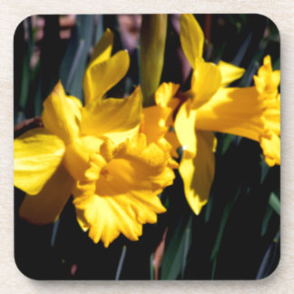 Pair of Yellow Daffodils Beverage Coaster