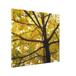 Pair of Yellow Maple Trees Autumn Nature Canvas Print
