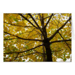 Pair of Yellow Maple Trees Autumn Nature Card