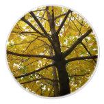 Pair of Yellow Maple Trees Autumn Nature Ceramic Knob
