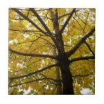 Pair of Yellow Maple Trees Autumn Nature Ceramic Tile