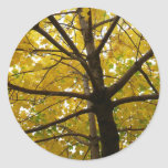 Pair of Yellow Maple Trees Autumn Nature Classic Round Sticker