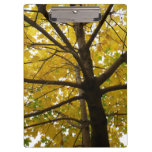 Pair of Yellow Maple Trees Autumn Nature Clipboard