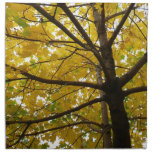 Pair of Yellow Maple Trees Autumn Nature Cloth Napkin