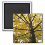 Pair of Yellow Maple Trees Autumn Nature Magnet